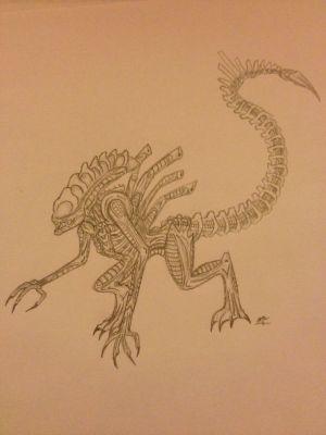 xenomorph drawing draw easy warrior getdrawings
