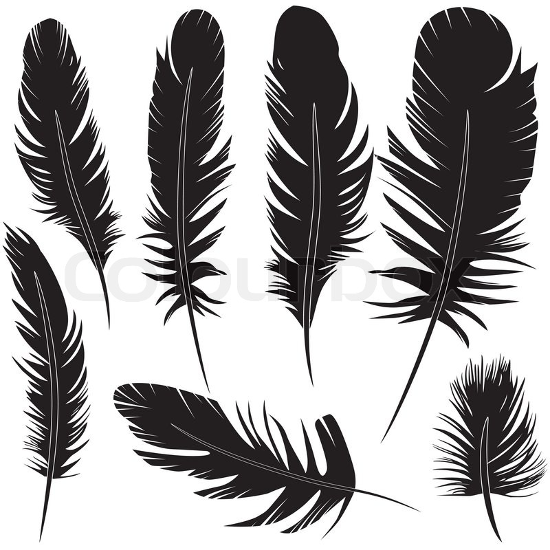 feather vector at getdrawings