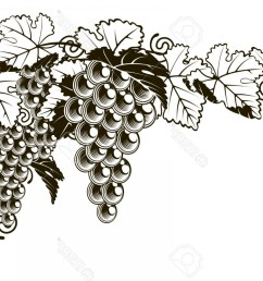 1560x1086 photostock vector an original illustration of a grapes on a grape [ 1560 x 1086 Pixel ]