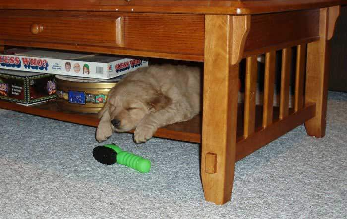 Crate Training a Puppy Made Easy With These Simple Steps