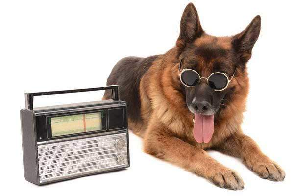 Dog-Radio-31319189_ml