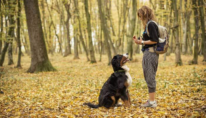basic commands for dog training