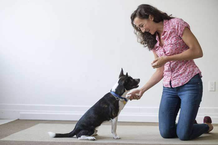 dog-obedience-training-tips