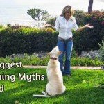 Busting The 10 Biggest Dog Training Myths