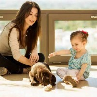 dog aggression training children