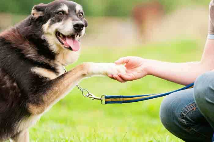 dog training tips tricks
