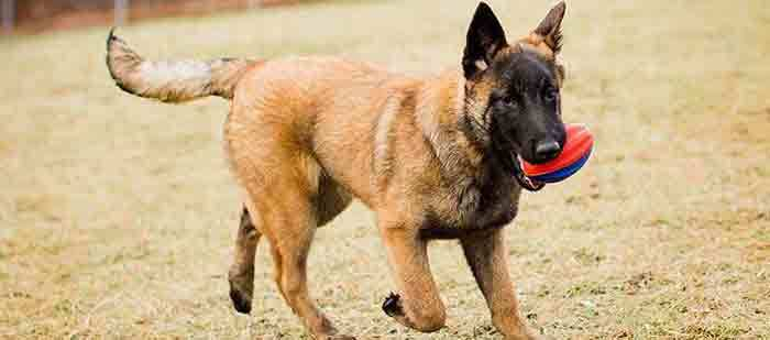 how to train a german shepherd puppy