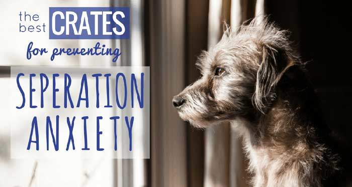 Solutions for separation anxiety in dogs