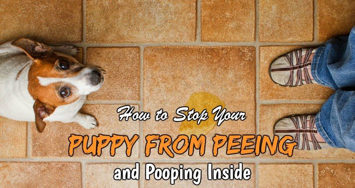 stop puppy peeing pooping inside