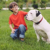 Is an American bulldog a good family dog?