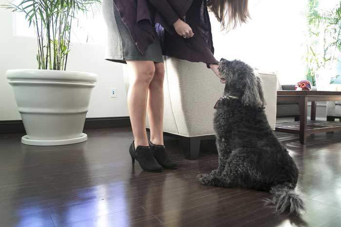 how-to-train-your-dog-to-greet-visitors