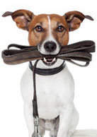 Who has the best online dog training videos