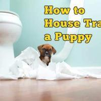 How to House Training a Puppy EASILY! Everything you need to know!