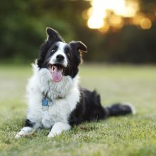 5 Quick Tips to a Smarter Dog