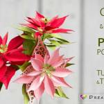 Paper Poinsettia Craft Paper Poinsettia Tutorial And Template C