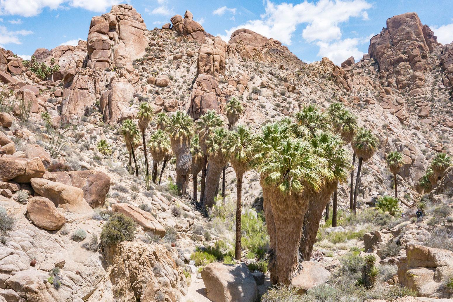 Joshua Tree - Lost Palms Oasis