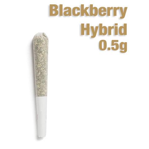 Preroll - Blackberry Half Gram