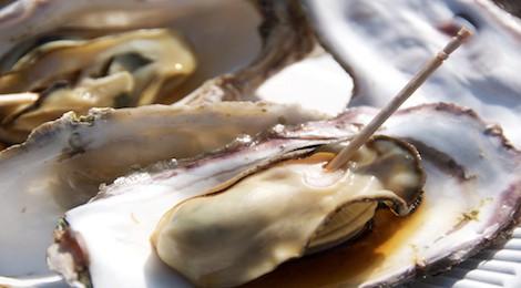 miyajima-oyster-festival-th