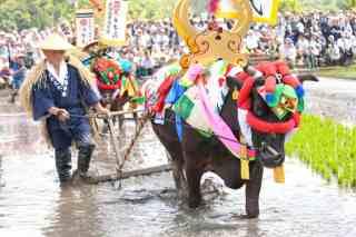 Mibu-no-hanadaue