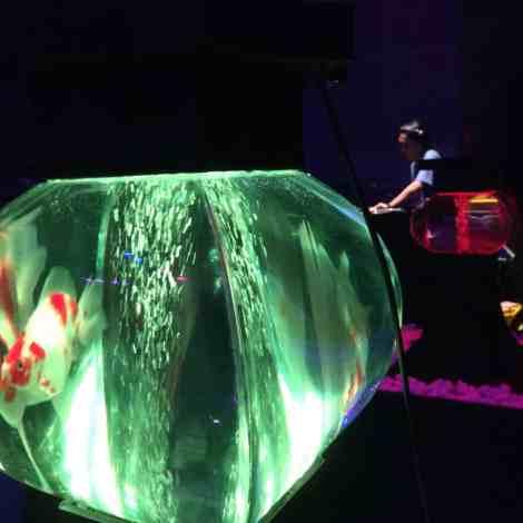 Art Aquarium - Ken Ishii