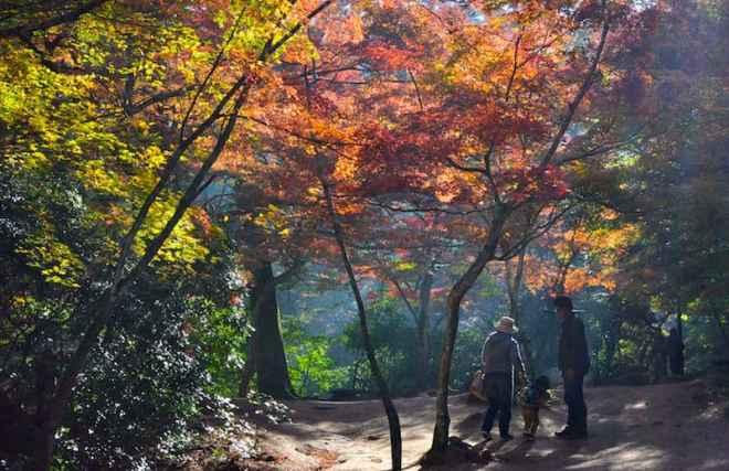 momijidanipark930