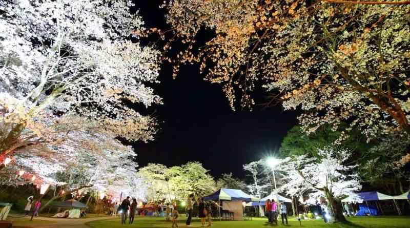 Ozekiyama Koen Miyoshi Sakura Light Up