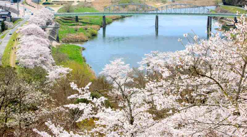 View through the cherry blossoms of the Gonokawa River from Ozekiyama in Miysoshi in Hiroshima, Japan