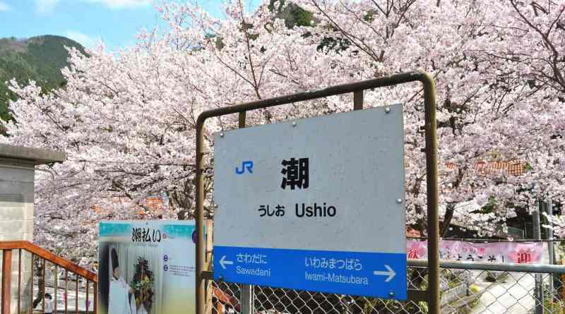 """Sakura Station"" Ushio"