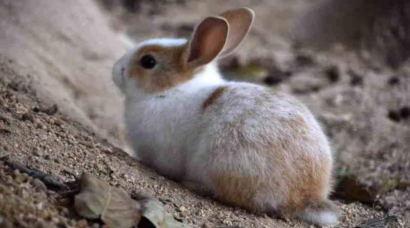 Genki Chugoku Tour Part 2: Kure | Takehara | Rabbit Island | Setoda | Kurashiki