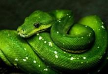 [100% OFF] Python Programming Course Bundle : Build 15 Applications