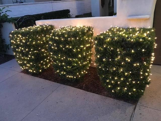 rancho-santa-fe-christmas-lights-bushes