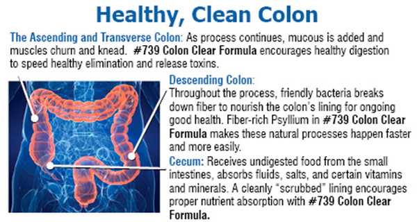 Healthy, Clean Colon