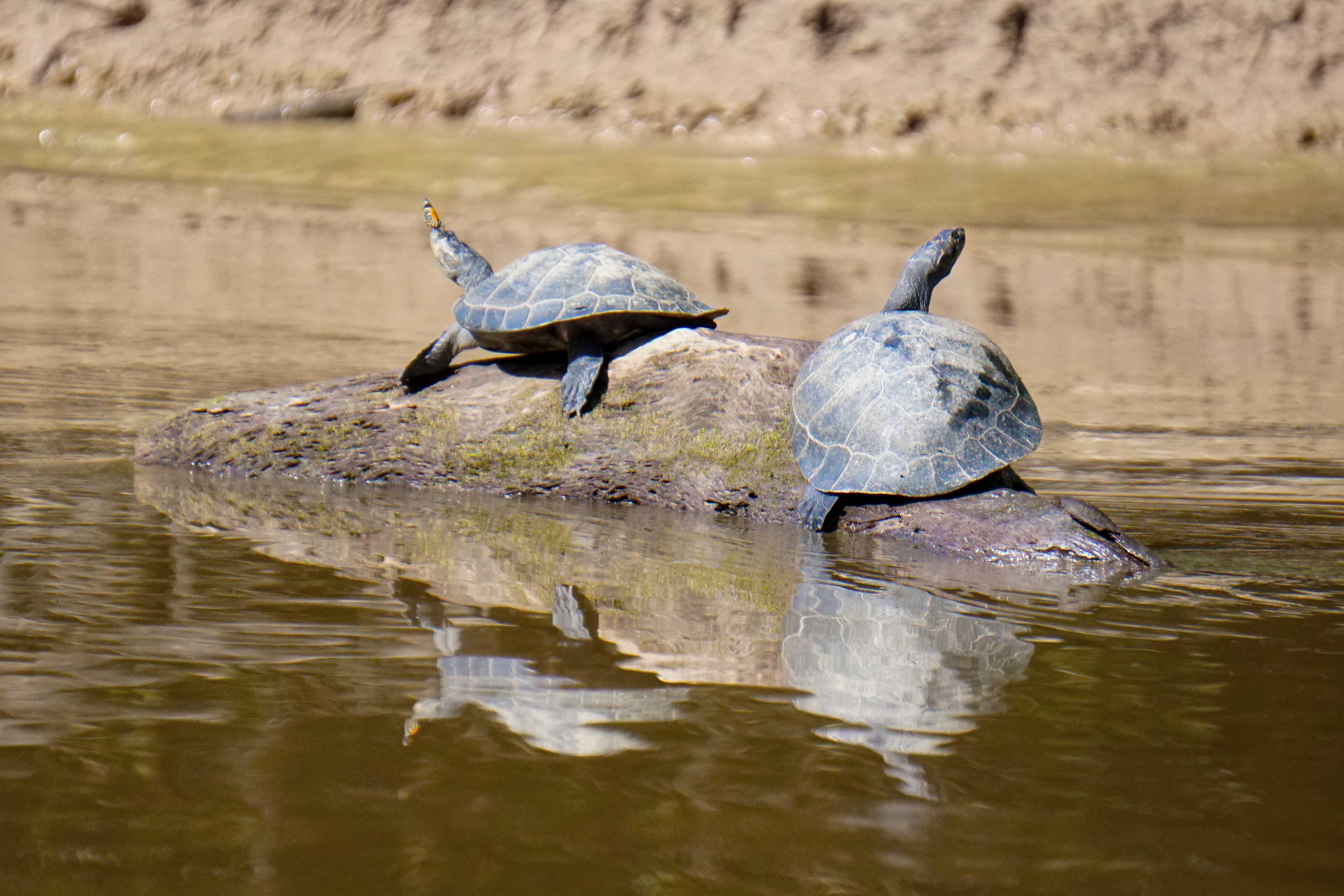 22 turtles sm