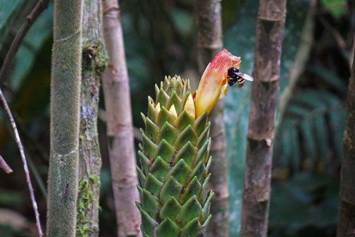 67 bee in a flower sm