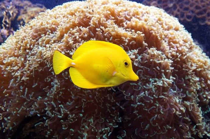 12 fishy yellow sm