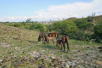 18 horsey donkeys sm