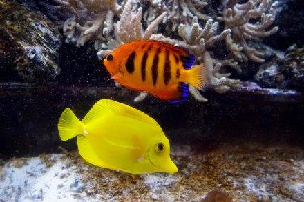 8 fishies sm
