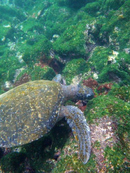 turtleswims1 sm