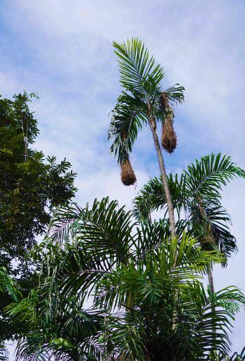 9 palms and sky sm