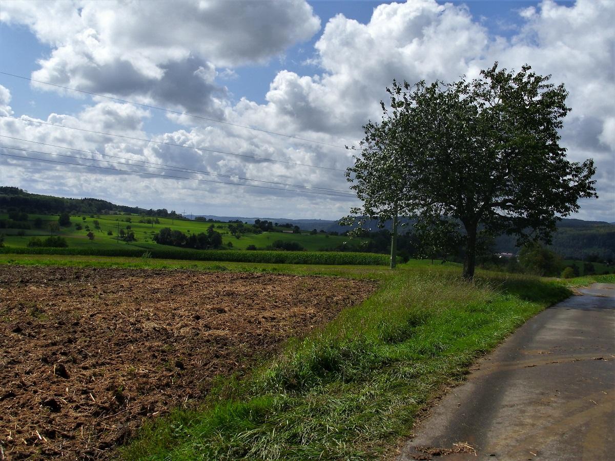 Campi ai margini di Schopfheim