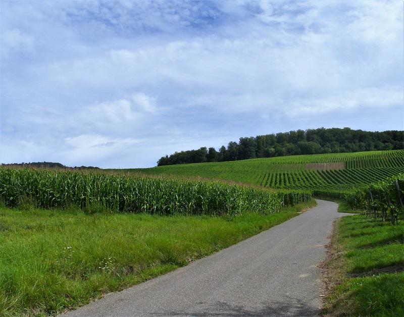 Mangraviato verso Friburgo