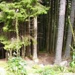 Titisee-Feldsee-Schluchsee - Titisee-Foresta.jpg