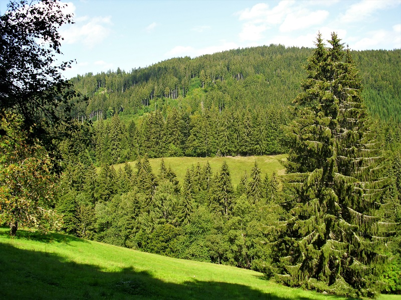 Vallate del Titisee