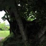 Abbazia-di-Beauport - Abbay-de-Beauport-meli.jpg