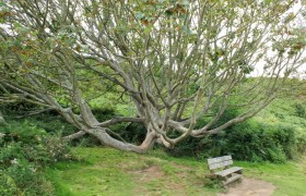 Costa-Granito-Rosa - Costa-di-Granito-Rosa-albero.jpg