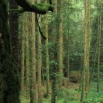 Huelgoat - Huelgoat-alberi-e-muschio.jpg