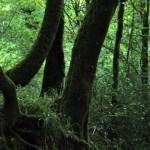 Huelgoat - Huelgoat-alberi-scuri.jpg