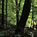 Huelgoat - Huelgoat-foresta.jpg