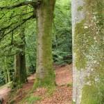 Pont-Aven - pont-aven-bois-damour-alberi-e-muschio.jpg