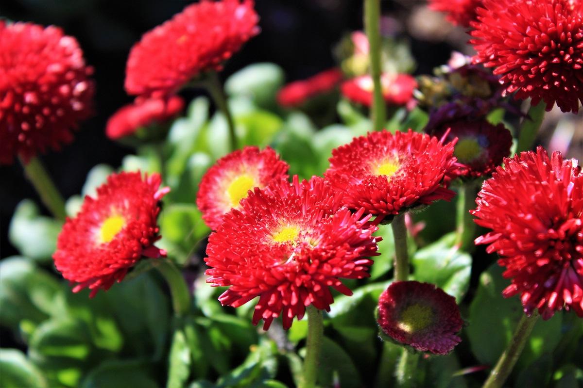 Menaggio - Menaggio-fiori-di-valery-5.jpg